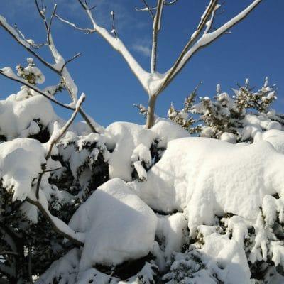 ある大雪の日